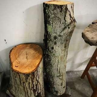 Fresh tree log