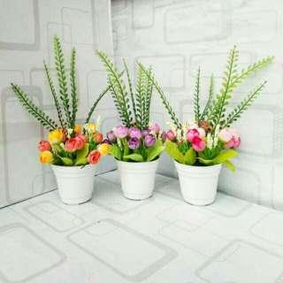 Bunga + Pot
