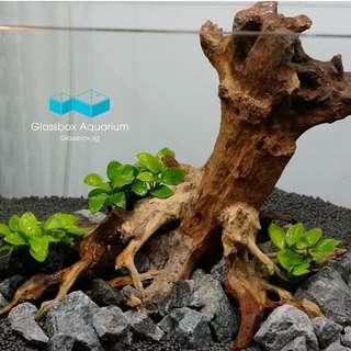 Rare Handcrafted Driftwood for Nature Aquarium