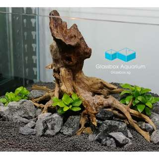 Rare Handcrafted Driftwood for Nature Aquarium