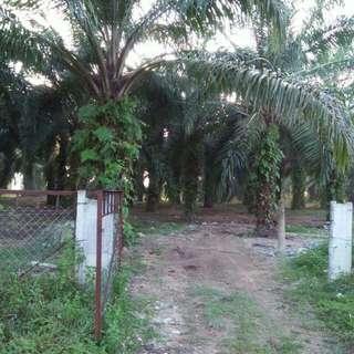 Tanah Pertanian Berhampiran Jalan Utama, Batu Gajah