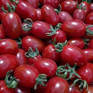 🚚 溫室無毒頂級小番茄