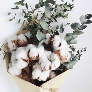 💐YourStalkMarket - Dried Cotton Flower Single Stalk