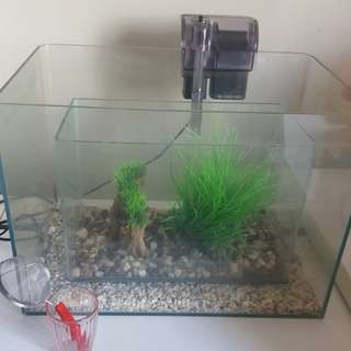 Fish Tank aquarium set up