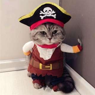 cat/dogs pirate costume