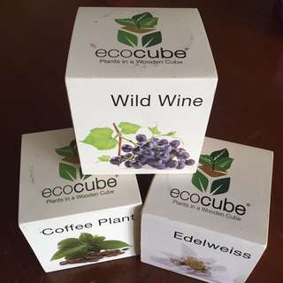 Eco Cube - Coffee, Edelweiss, Wild Wine