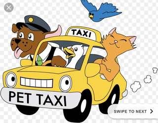 Reliable pet transport