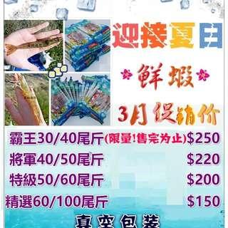 達人蝦-台南在地養殖海水白蝦-將軍級40/50尾/斤