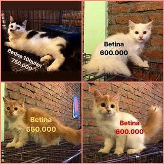 Kucing lucuuuuuu harga digambar yaa