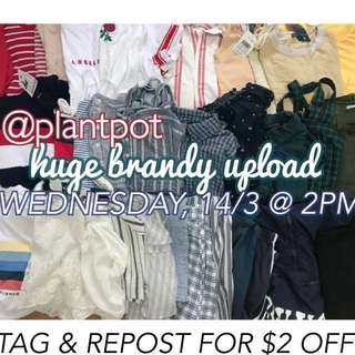 Plantpot Brandy Melville sale!
