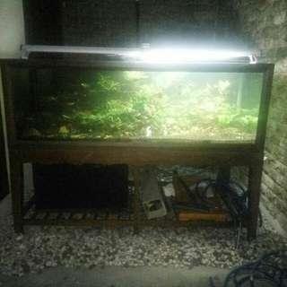 Aquarium Ikan
