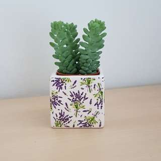 Succulent Pot/Decal art/classes/succulent planter