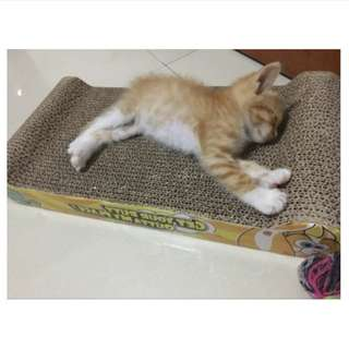 Like For Likes Cat Scratchboard scratcher Lounge pet new catnip