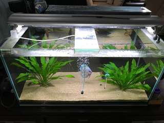 3F Tank with discus fish