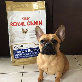 Royal Canin Adult French Bulldog Dry Dog Food