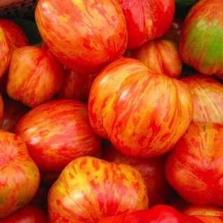 🚚 Tomato 'Duo' seeds