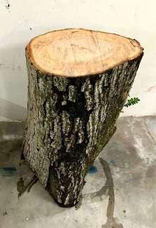 Fresh wood tree trunk