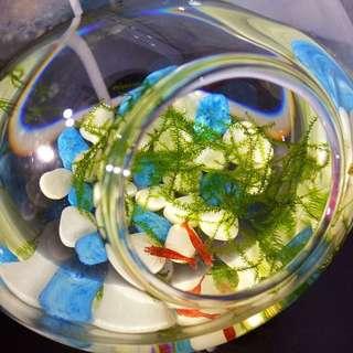 Shrimp bubble tank
