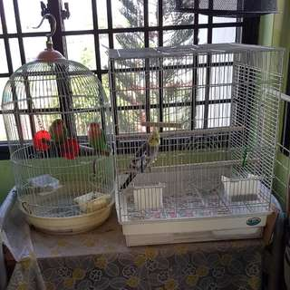 1 cockatiel with cage and 2 males love birds with cage for sale
