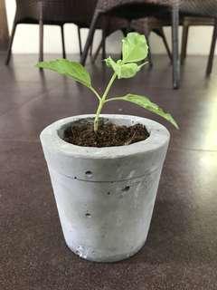 Concrete Planters (Handmade with ❤️)