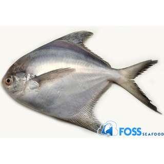 Foss Seafood Ikan Bawal Putih Frozen (beku) size 200gr-300gr