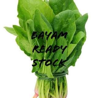 Sayuran hydroponik