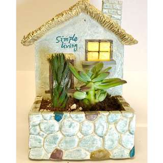 Rich green succulent plant in hand crafted house
