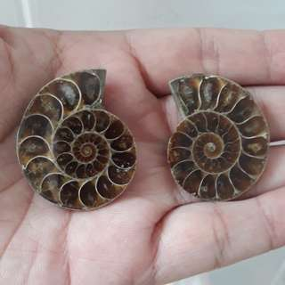 🎆Special Offer🎆Nice Natural split Ammonite(天然斑彩螺) from Madagascar available for Sale. Help bring Fortune, change/spin fate.(转运招财发财螺)