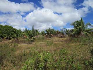 Farm Land for Sale in Bohol 3 hectares