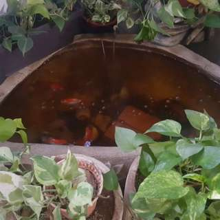 3 ft fibre pond
