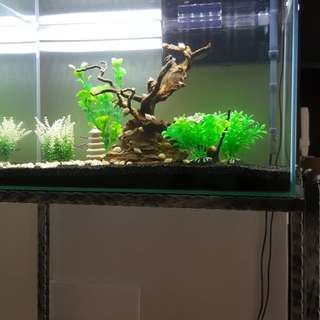 Fish Tank (full set)