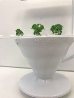 (偽文青呃like)日本 Hario 02 樹脂咖啡濾杯(白色)