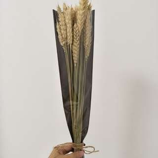 Wheat Dry Grass