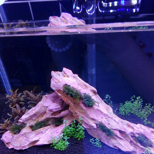 Tissue culture plants + aquarium set