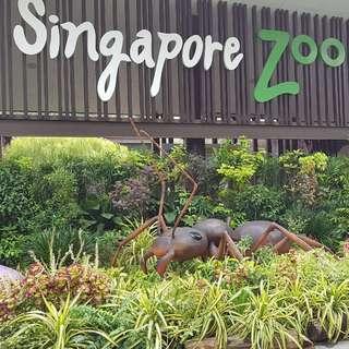 Singapore Zoo . Zoo . River Safari . Night Safari
