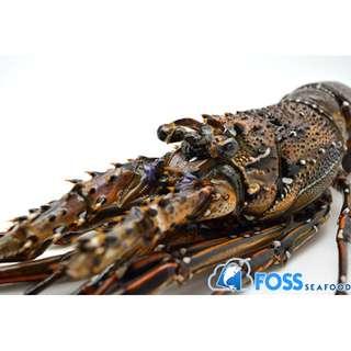 Foss Seafood Lobster Batik Frozen (beku)