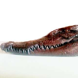 Crocodile alligator head taxidermy specimen