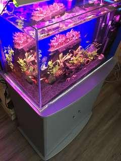 2ft ios tank