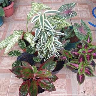 Paketan 6 tanaman .termasuk pot tinggal pajang.hanya kirim by gosend aja