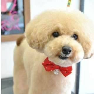 Dog Grooming Singapore