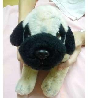 Cute Little Pug