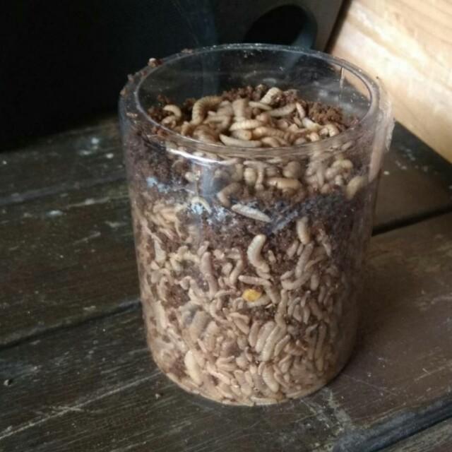 (代售)黑水虻 -寵物食品 內有介紹🌸可試用