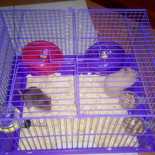 RABBIT CAGE - HAMSTER CAGE - DOG CAGE
