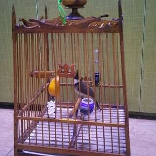 thai jambol cage ((only cage))