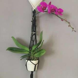 Macrame planter Rope Art Knot Art