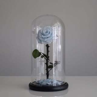 Premium Preserved Ecuadorian Roses in Glass Dome