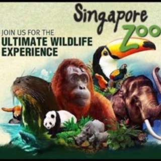 Singapore Zoo Night Safari Jurong Bord Park with unlimited Tram rides
