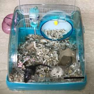 Collapsible dwarf hamster tub cage