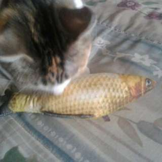 Pet toy cat fish squishy chew toy for cat. They love it. 20cm long.