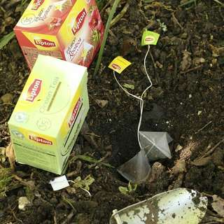 *Tips* Gardening ♡ Using Used Tea Bags For Plantings